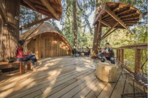 image of Microsoft treehouse offices as part of our great office space article
